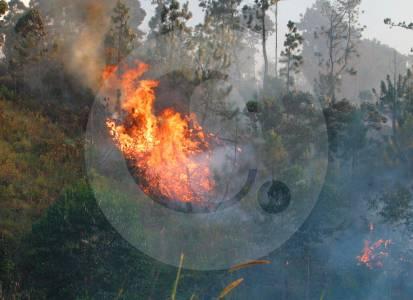 Incendios forestales han consumido 10.670 hectáreas en Colombia en 2021