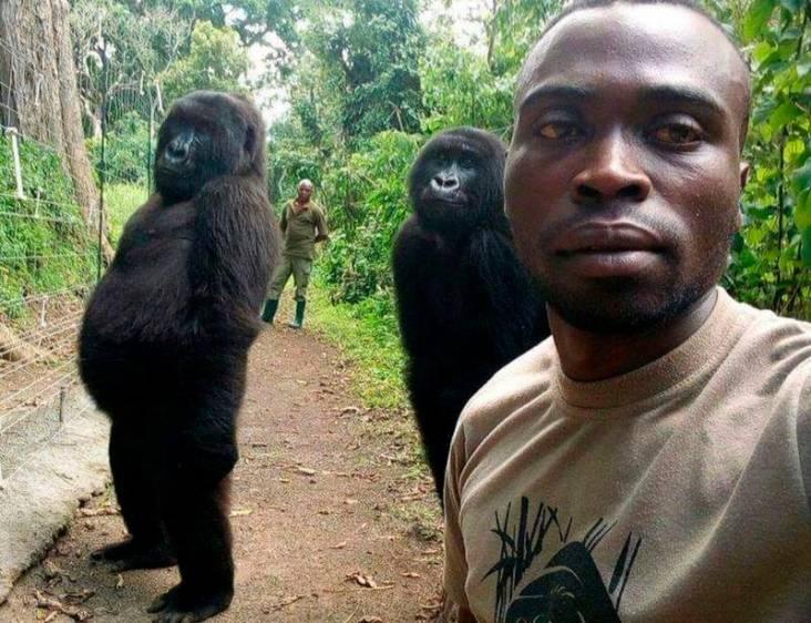 Esta fue la selfie que le dio la vuelta al mundo, en la que se ve a la gorila posando con su cuidador. Foto: ONG Virunga