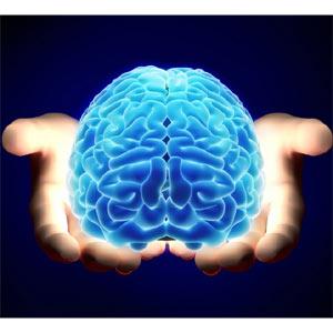 cerebro y manos