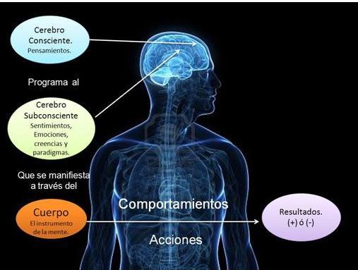 Resultado de imagen de El cerebro elige nuestros actos