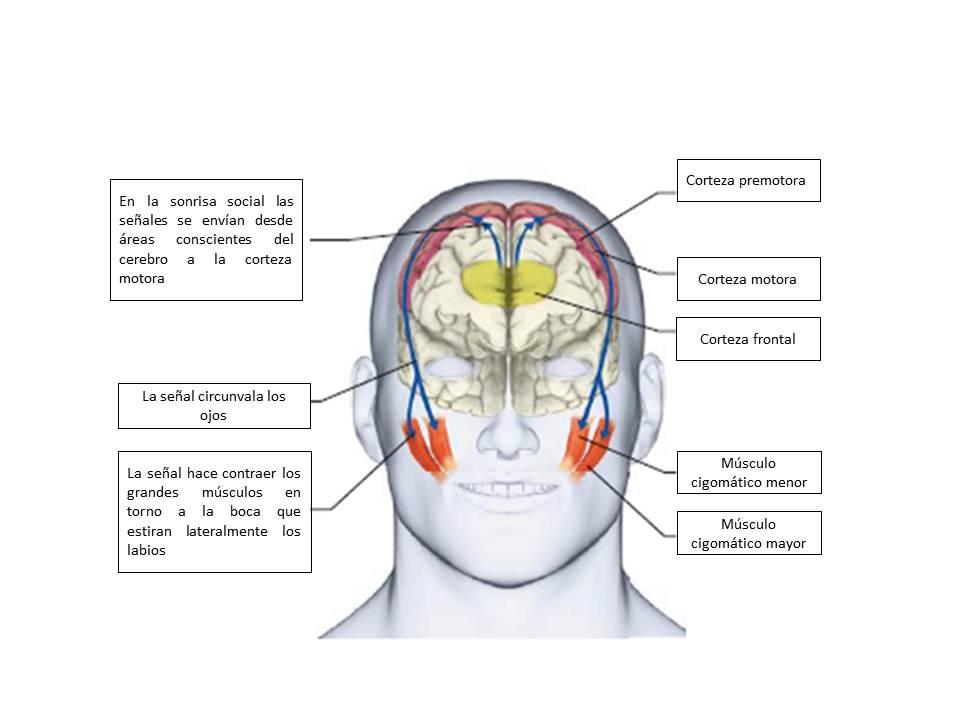 Cerebro en práctica | Cerebro en práctica