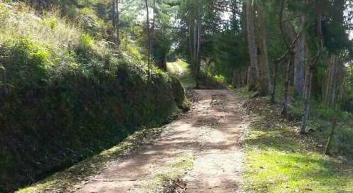 En este camino veredal de El Peñol fueron encontrados los cuerpos. Cortesía de www.mioriente.com