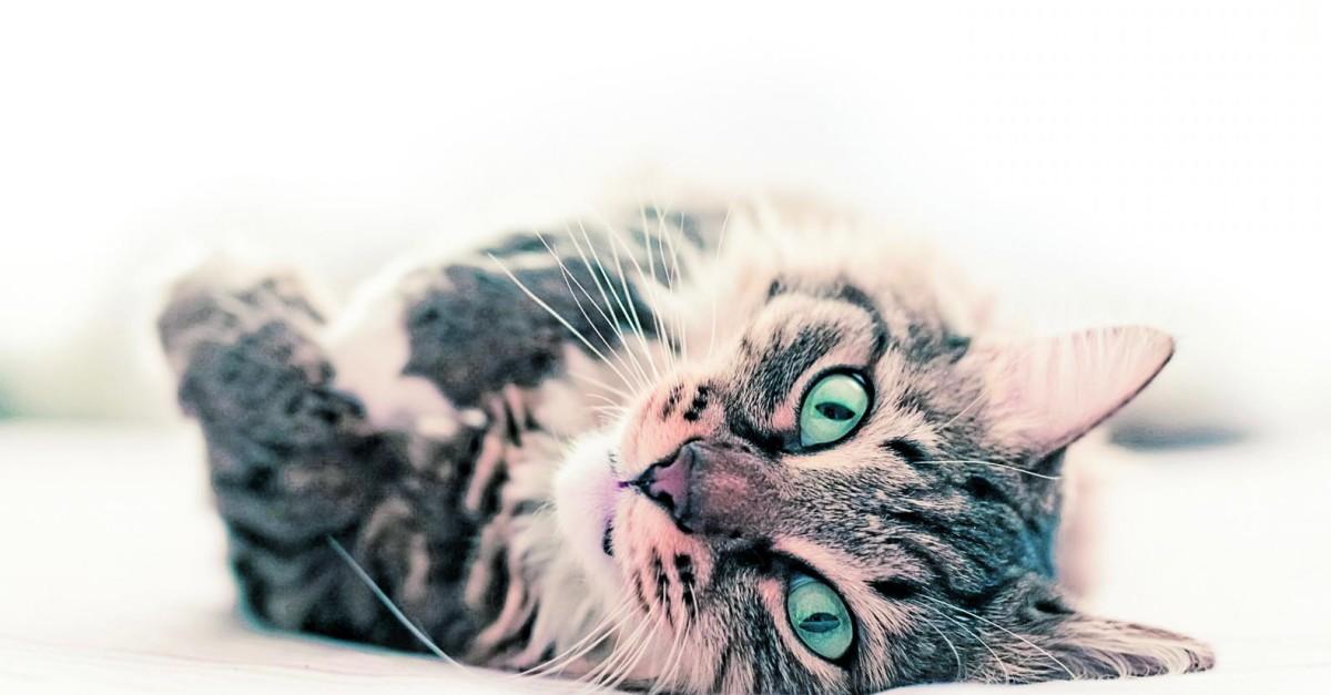 19 preguntas sobre los gatos b39241615fca
