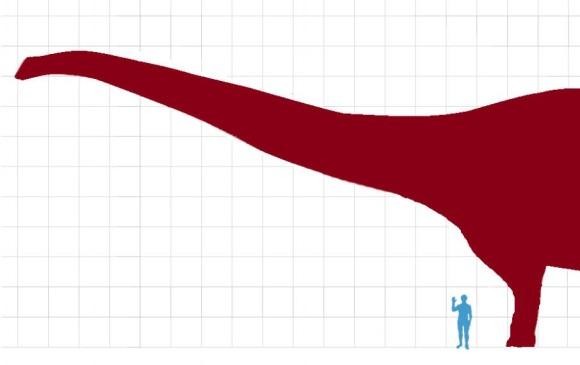Comparación del tamaño del Patagotitan con el ser humano. Foto: cortesía Wkipedia, Chucao.