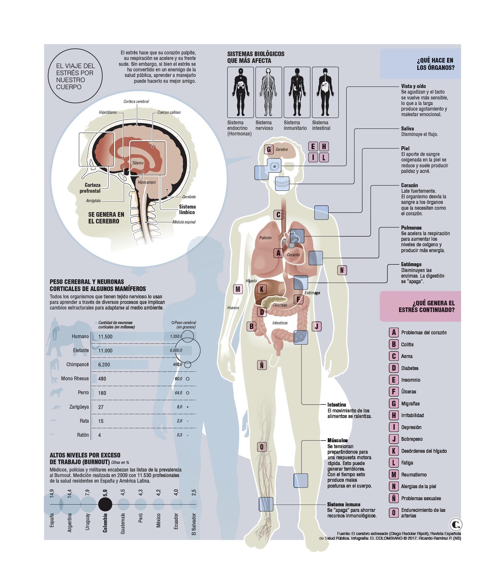 Estos son los efectos del estrés en el cuerpo humano