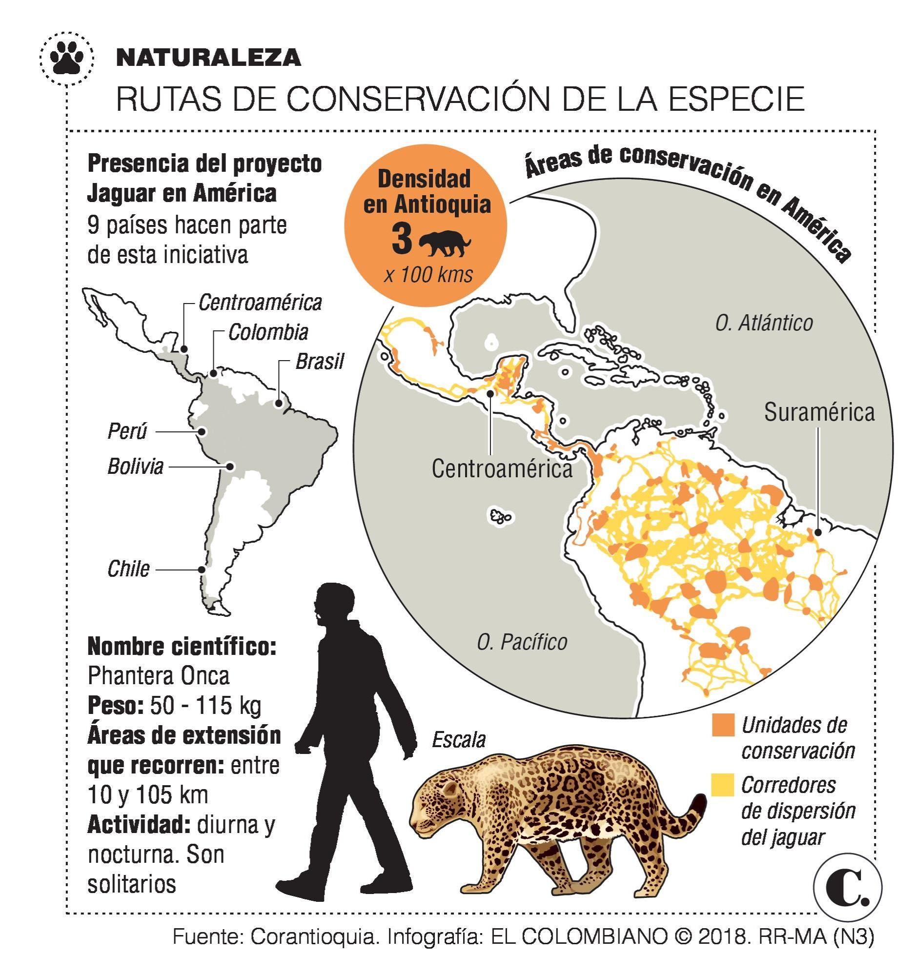 Conexión jaguar: tras los pasos del último gran felino