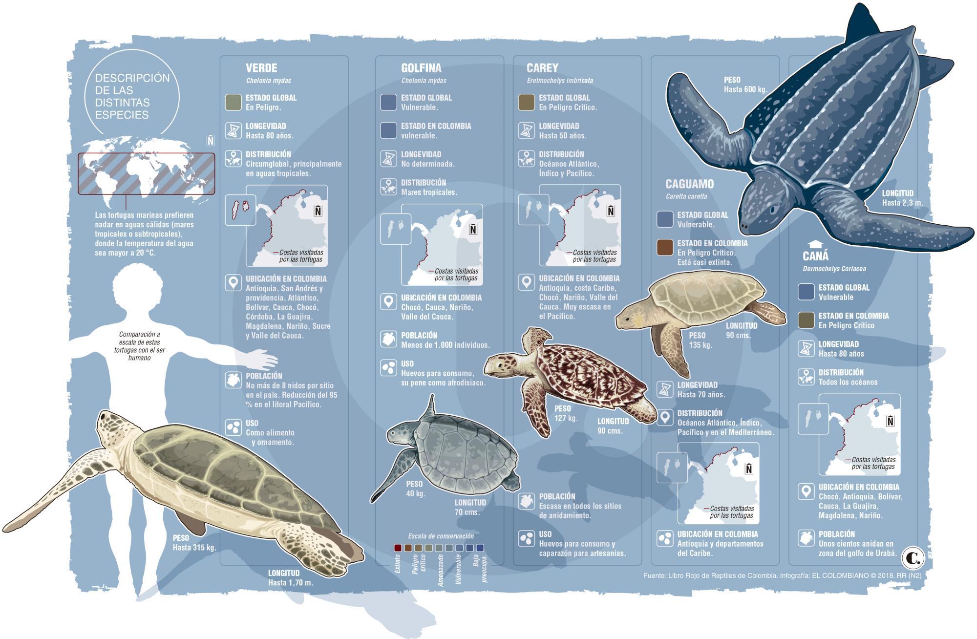Tortugas marinas: grandes olvidadas