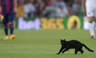 Este gato negro se paseó por el Camp Nou en la primera fecha de la Liga española 2015. La hinchada catalana temió un mal año, pero, al contrario, el Barcelona lo ganó todo. FOTO AFP