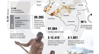 Campesinos arrancaron 30.265 hectáreas de coca en el país