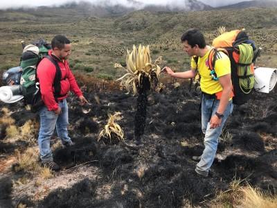 Queman tres hectáreas de frailejones en el parque de Los Nevados