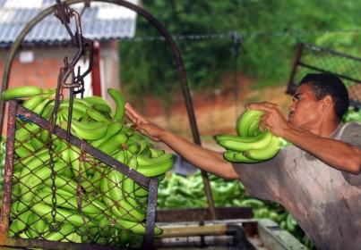 Inventario agropecuario de Colombia