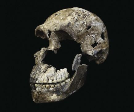 El cráneo casi entero de Neo, como se llamó al individuo con esqueleto muy completo. El H. naledi tenía rasgos antiguos, pero otros como el pie, moderno. FOTO J. Hawks