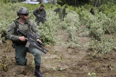 Erradicación forzosa de la hoja de coca y la polémica por las cifras
