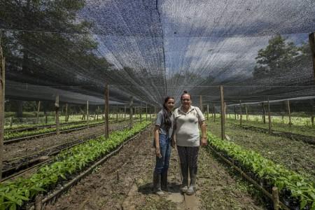 El cacao que cambia a Arauca