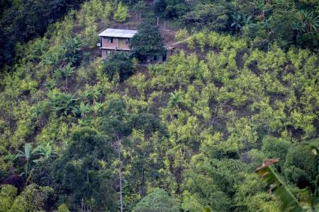Cultivo de coca en Colombia aumentó el 17 % en 2017, según la ONU