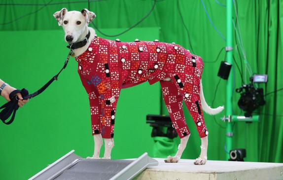 Los datos de movimiento de los perros permitirá crear animaciones de animales más realistas en las películas y los videojuegos. FOTO: Cortesía Anna Barclay, University of Bath.