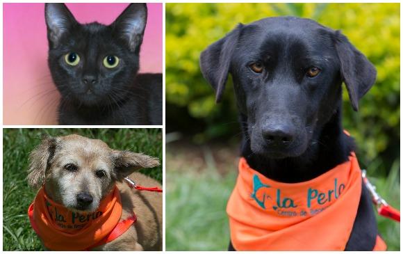 Los gatos son recomendados para personas que vivan solas. Los perros geriátricos para familias poco activas y mascotas como Constantino (a la derecha), para familias con niños.