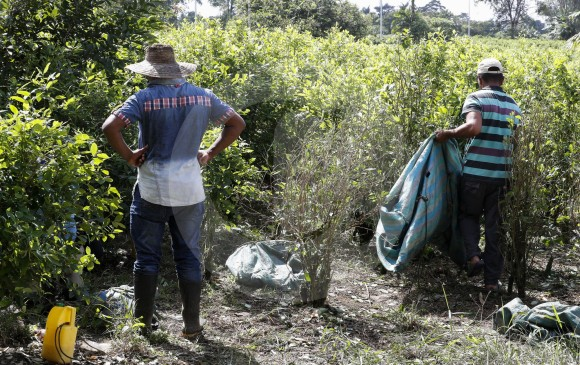 Duque celebró informe de EE.UU. sobre disminución de cultivos de coca