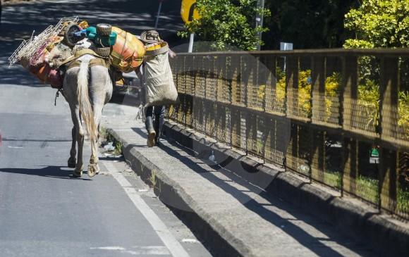 Según la Personería, Medellín es el primer destino de los desplazados del Bajo Cauca. Algunas familias también han llegado a Yarumal, en el Norte de Antioquia. FOTO julio César Herrera