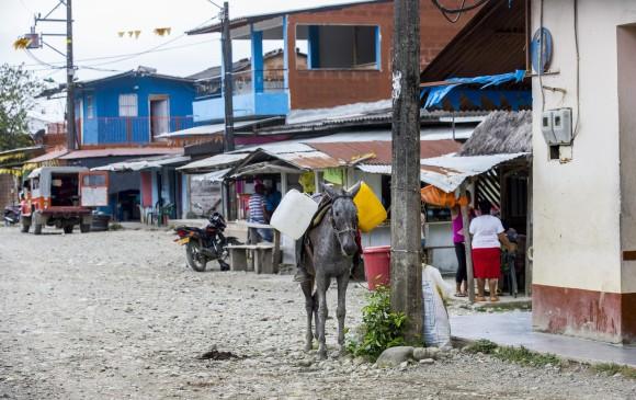 Asesinan a otro miembro de las Farc en Antioquia