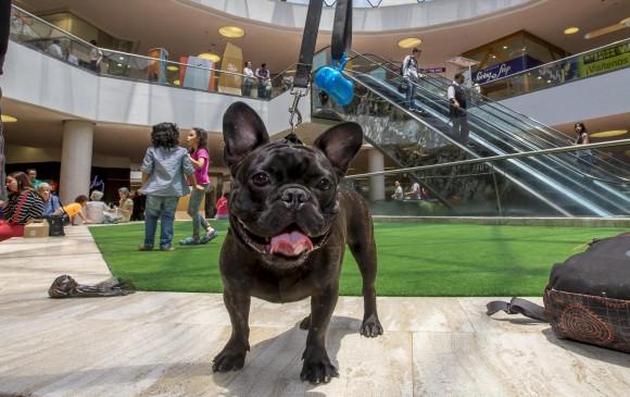 Mascotas Centros Comerciales