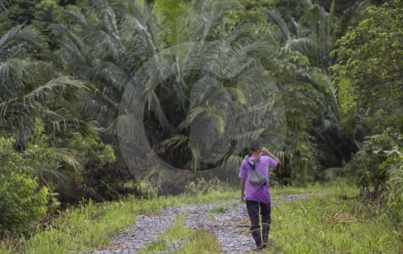 Límites del Chocó están definidos hace 70 años y siguen vigentes: Igac