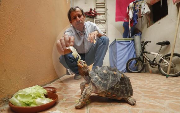 Ángel Gabriel y su familia recientemente tomaron la decisión de entregar a la tortuga Sofía a las autoridades. FOTO manuel saldarriaga
