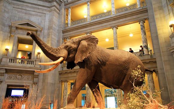 Museo de Historia Natural, EE. UU.FOTO Cortesía Ingfbruno