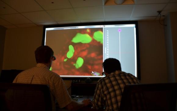 La investigación sobre células madre crece de manera vertiginosa. Esto se ha prestado para que aparezcan estudios fraudulentos o sin rigurosidad científica. FOTO Cortesía Drexel U.