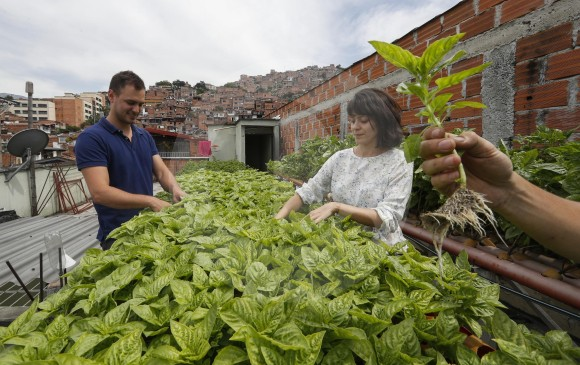 En Las Terrazas De Medellín Ya Crecen Frutas Hortalizas Y Peces