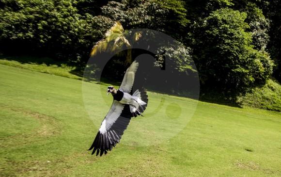 La ciudad es referente nacional en el cuidado de las aves y en actividades en torno a ellas. FOTO Jaime Pérez