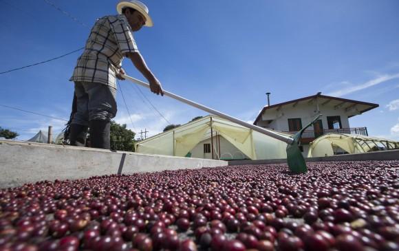Producción colombiana de café cae 11% en enero por clima adverso
