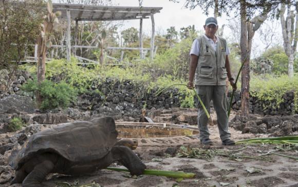 Especie de tortuga que se creía extinta será reproducida en cautiverio — Galápagos