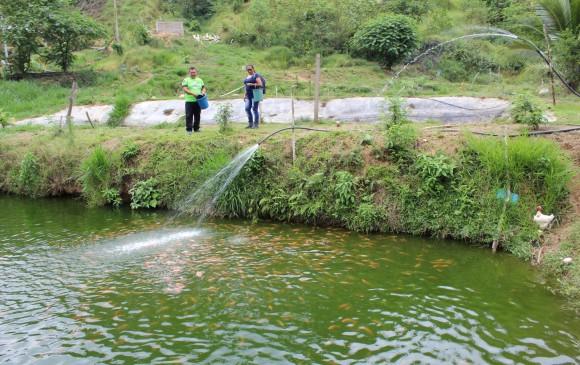 En Mutatá, los excombatientes de las Farc cuentan con varios proyectos productivos, uno de ellos de piscicultura. FOTO Cortesía ue