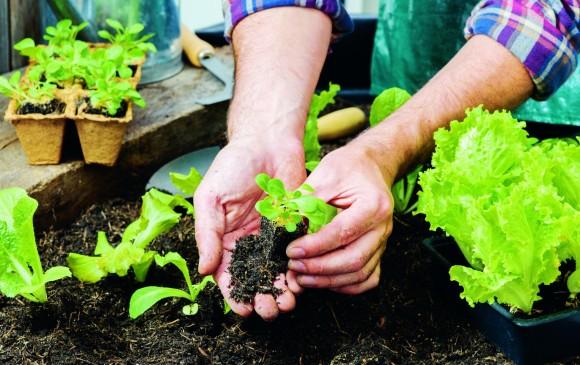 Los recipientes que se van a usar para plantar deben estar bien lavados y tener un buen drenaje. El Jardín Botánico ofrece cursos para aprender sobre agricultura urbana. FOTO SSTOCK