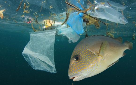 Resultado de imagen para plastico en el oceano