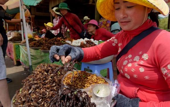 La tarántula no forma parte de las especies en peligro de Camboya pero la deforestación masiva destruye su hábitat natural. FOTO: Afp