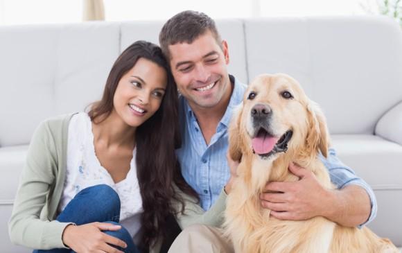 Matrimonio Catolico Sin Hijos : La nueva tendencia urbana los papás de mascotas
