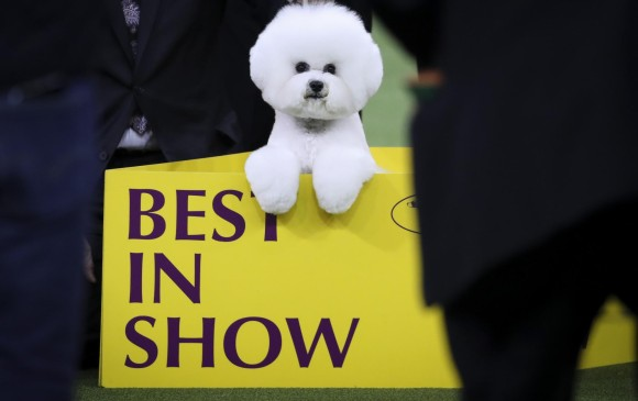 Flynn, el Best in Show. FOTO: Reuters