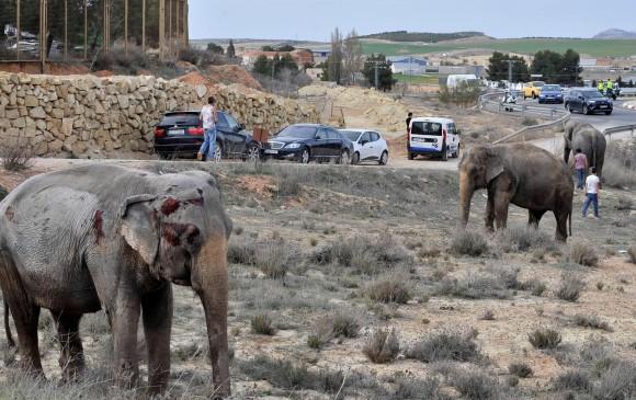 ¡Trágico! Muere elefante tras volcamiento de un camión de circo en España