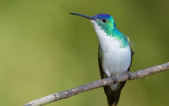 Antioquia encabeza el reporte de aves avistadas en Colombia durante el Global Big Day. Foto: Cortesía ebird.org.
