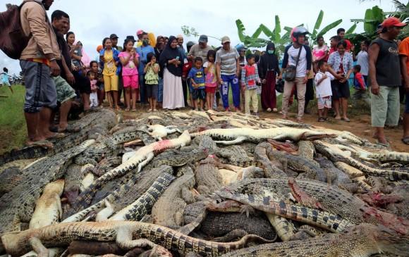 Pobladores matan a 292 cocodrilos para vengar la muerte de un vecino