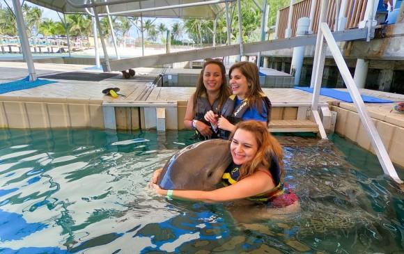 Tiburones, delfines y leones marinos en el mismo lugar.