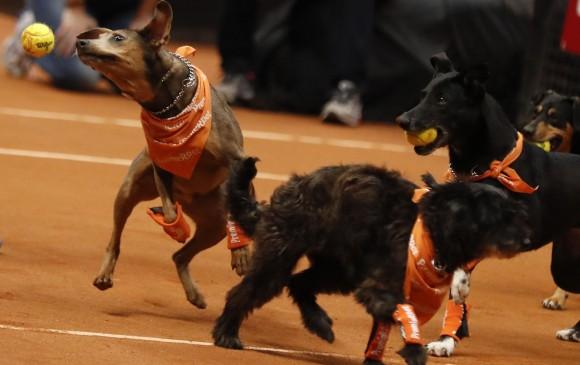 Todos los perros quieren agarrar las pelotas. FOTO Efe/Sebastião Moreira