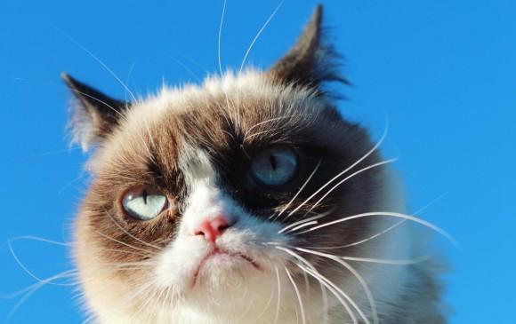 Grumpy Cat, la gata gruñona, gana millonaria demanda