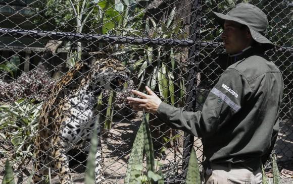 ¿Pierden los animales el miedo a los depredadores tras contacto humano?