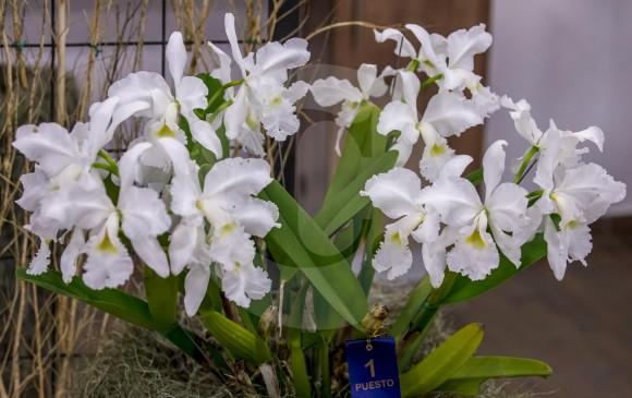 Una flor elegante y llamativa