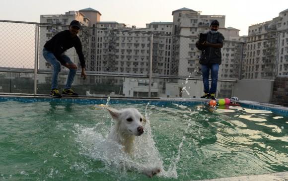 Así es Critterati, el primer hotel de lujos para perros en India. FOTO AFP