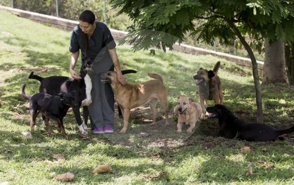 Municipios del Valle de Aburrá, los mejores cuidando a sus mascotas
