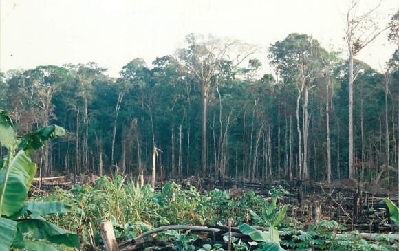En el mundo hay 9.600 especies de árboles en peligro de extinción
